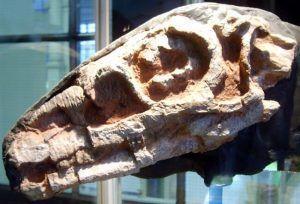 skull-riojasaurus