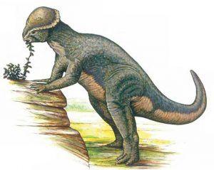 Stegoceras-dinosaur