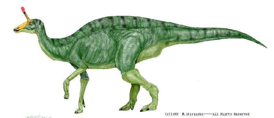 characteristics-Tsintaosaurus