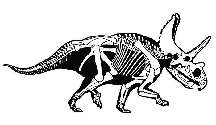 characteristics-anchiceratops