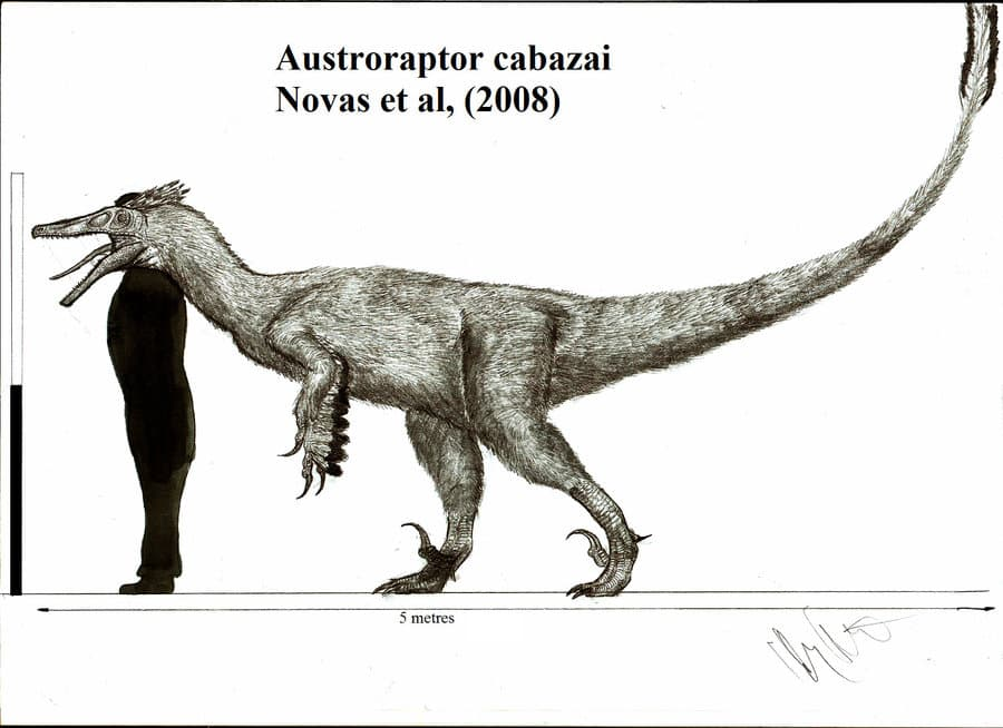characteristics-austroraptor