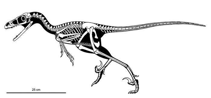 characteristics-bambiraptor