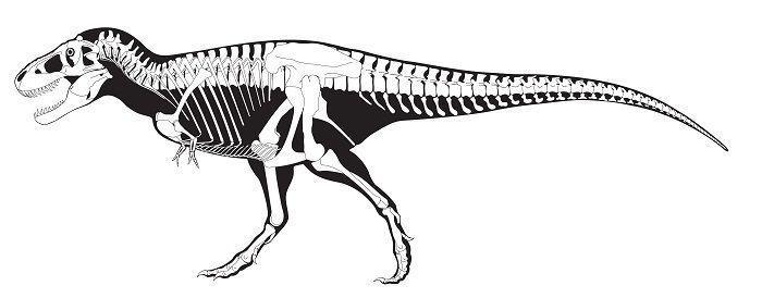 characteristics-tyrannosaurus-rex