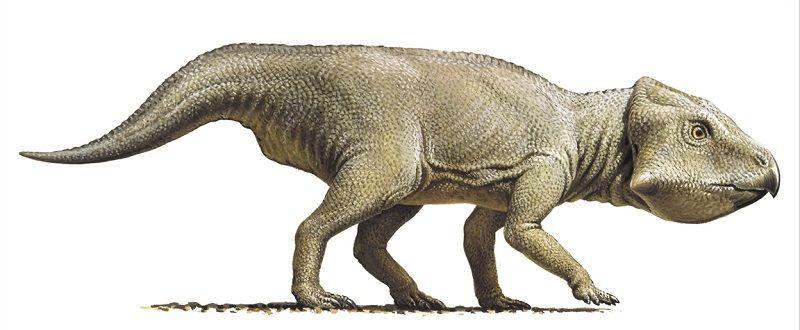 dinosaur-leptoceratops