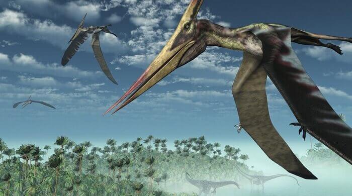 picture-pterodactylus