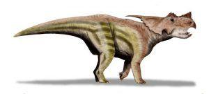 Achelousaurus-dinosaur