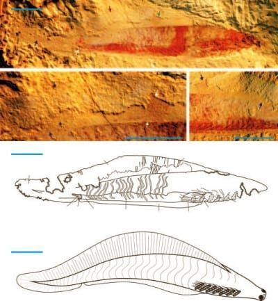 Haikouichthys-fish