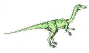 Procompsognathus-description