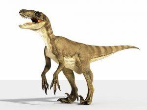 Velociraptor-perfil
