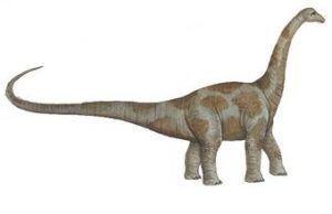 aepisaurus-photo