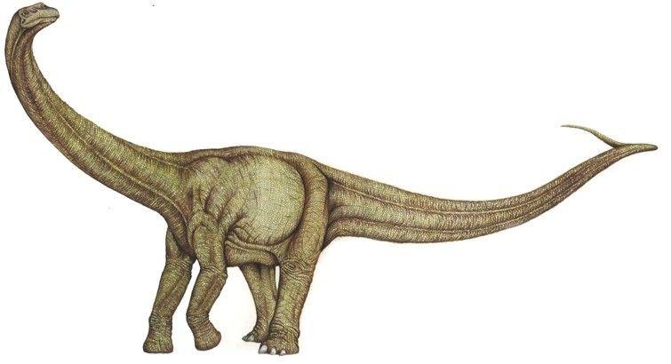 aepisaurus-picture