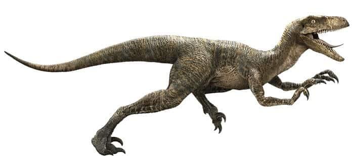 velociraptor-characteristics