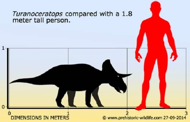 turanoceratops-person