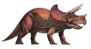 photo-triceratops