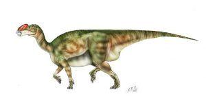 muttaburrasaurus-dinosaur