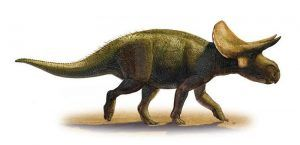 turanoceratops-picture
